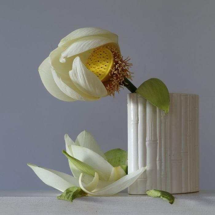 Неяркая красота в серии натюрмортов `Imperfect`. Фотограф Emma Bass