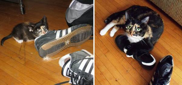 Празднование Всероссийского дня кошек на alldayplus! Фотопроект `Before-And-After`