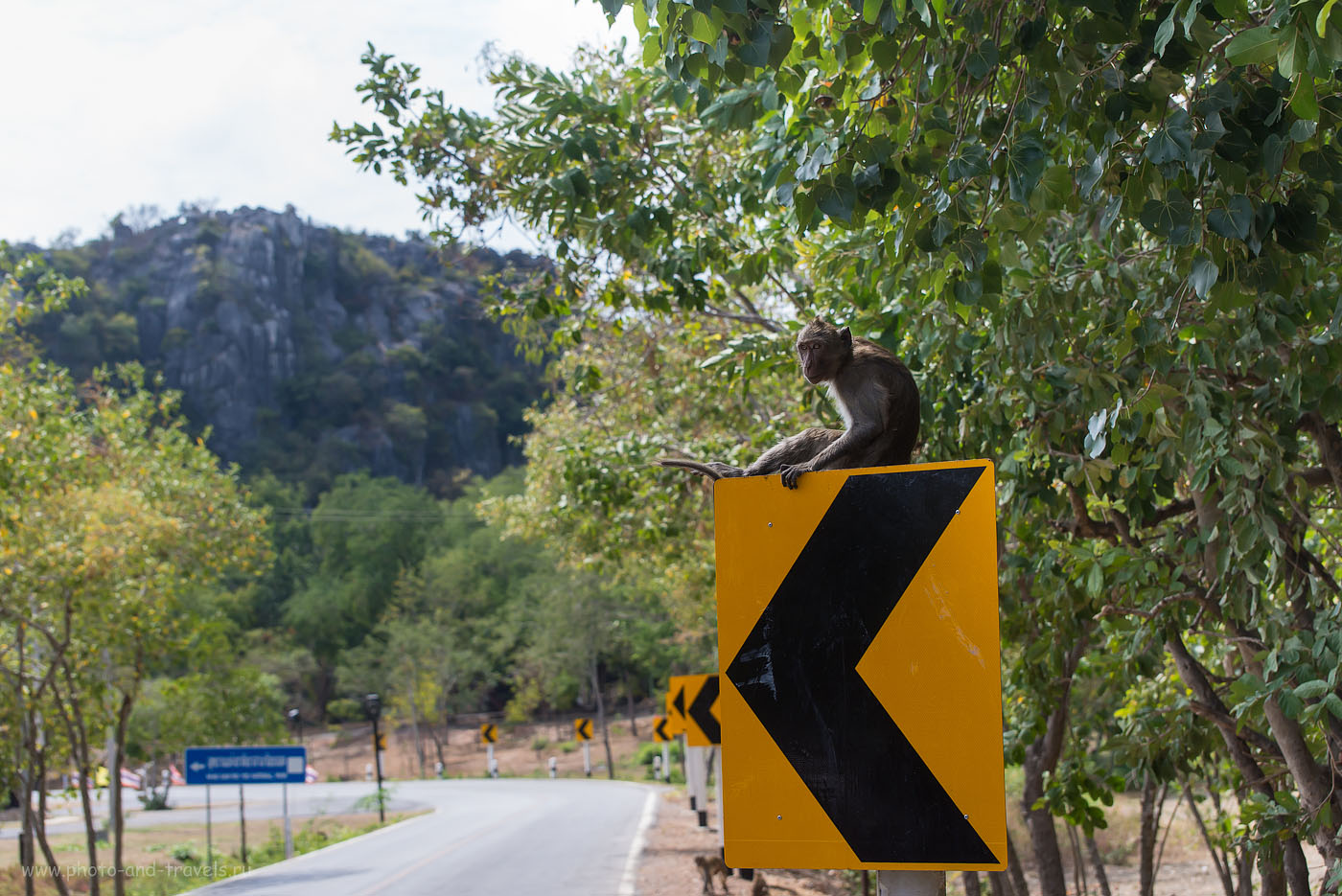 Фото 11. Наш Кинг-Конг. Поездка на автомобиле в национальный парк Кхао Сам Рой Йот, что располагается недалеко от города Хуахина. Центральный Таиланд. (320, 70, 5.6, 1/640, телеобъектив Nikkor 70-300, фотоаппарат Nikon D610)