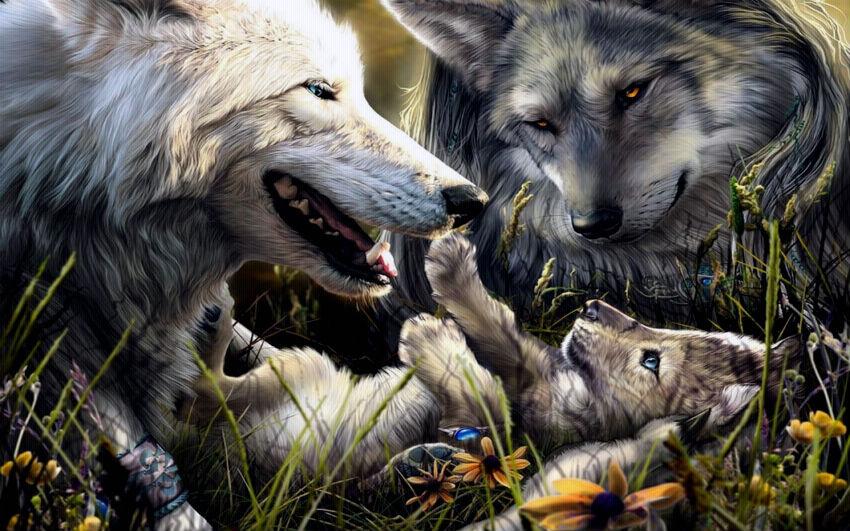 В свободной жизни волчья суть…