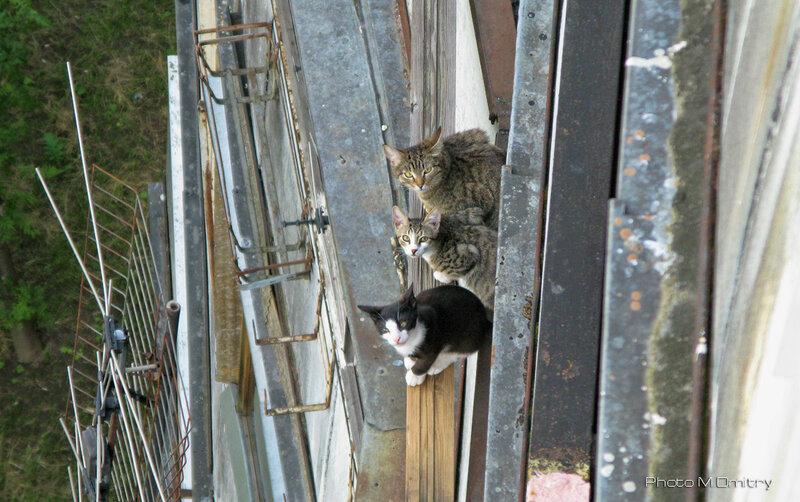 Кошки & Коты (2008)