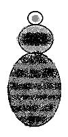 Bombus equestris (veteranus)