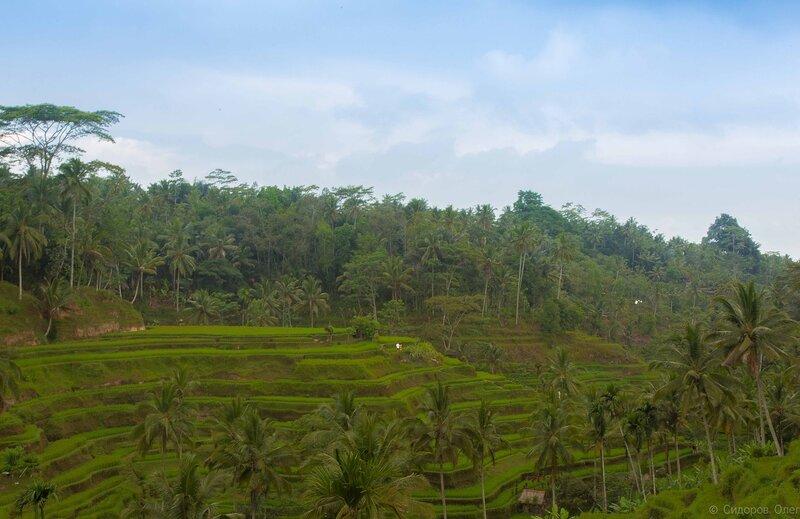 Бали ч1-148.jpg