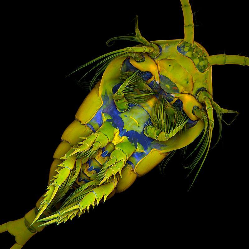 14. Доктор Жан Мишельс Университет Кристиан-Альбрехтс в Киле Киль, Германия Морской веслоногий рак,
