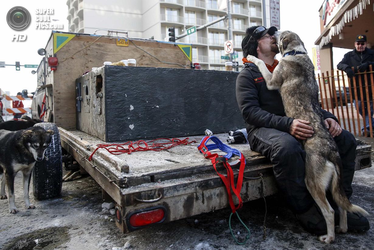 США. Анкоридж, Аляска. 1 марта. Собака из упряжки Джейсона Макки ластится к своему хозяину. (REUTERS
