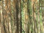 158.JPG Сон леса.