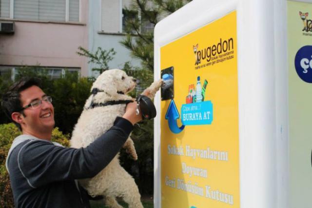 Вединговые автоматы для бездомных животных