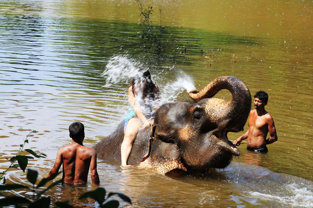 Фото 15. Катание на слонах, обычно, сопровождается купанием туристов в реке. Экскурсии на Гоа. Отзывы об Индии