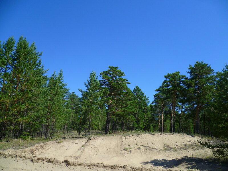 Семипалатинск, ленточный бор (Semipalatinsk, Forest belt)