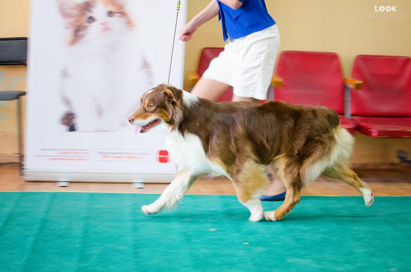 Выставочные успехи наших собак - 5 - Страница 27 0_a8818_c12c4fcc_XL