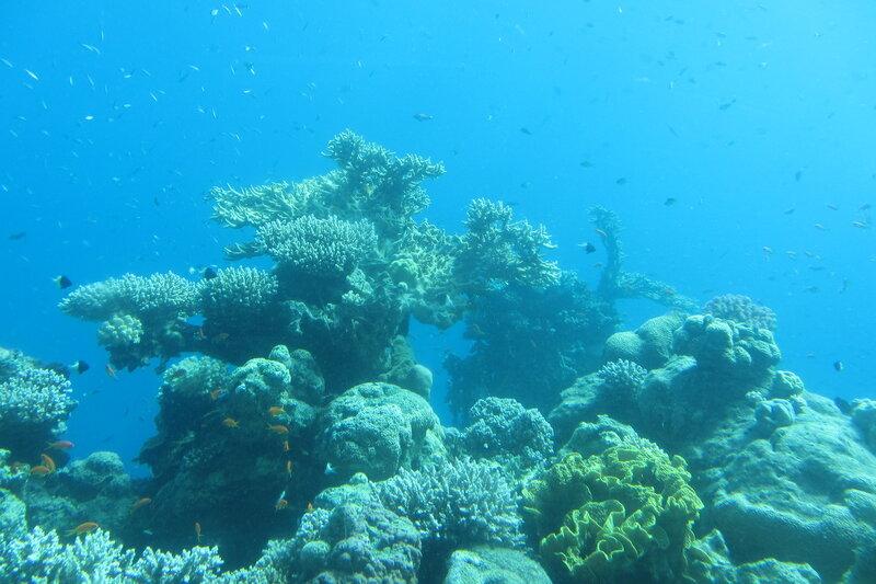 Кораллы в естественной среде обитания