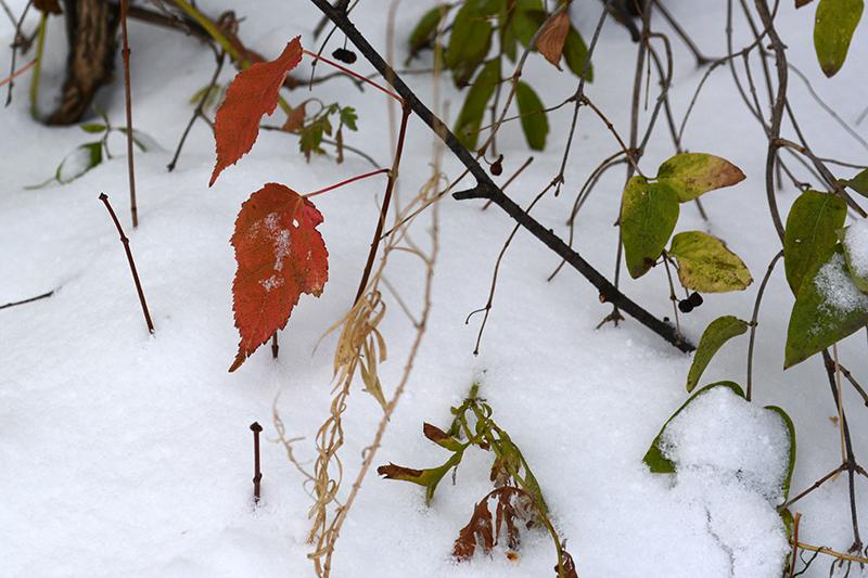 осень под снегом 4