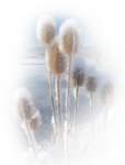 libellulegraphisme_paysage_hiver2.png