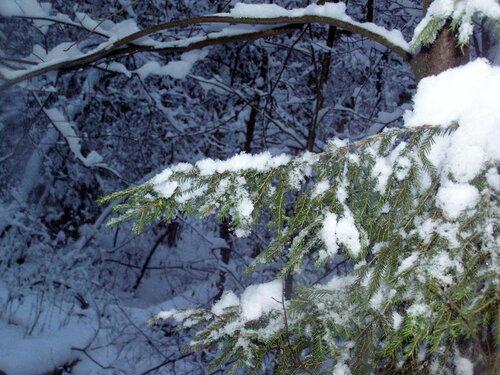 Природа зимой: второй первый снег в лесу