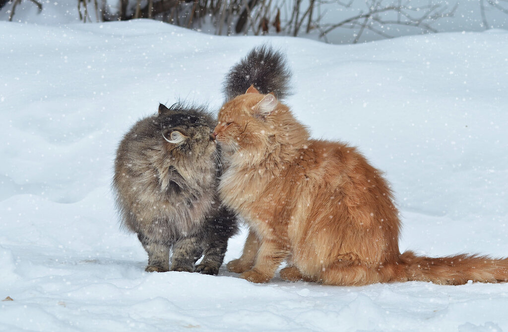 Двое, забота, нежность, дружба, любовь!