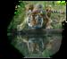 тигр.png