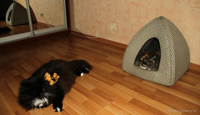 Эллис & Джесс (2011)