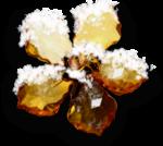 natali_design_xmas_flowerglass2-sh.png