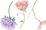 цветочки (9).png