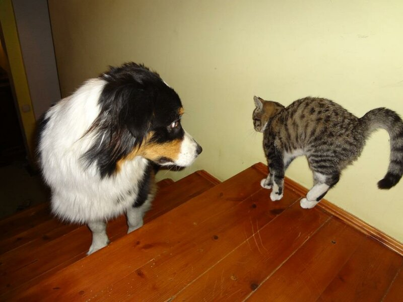 Кому коты? 0_167740_ea1c6a6d_XL