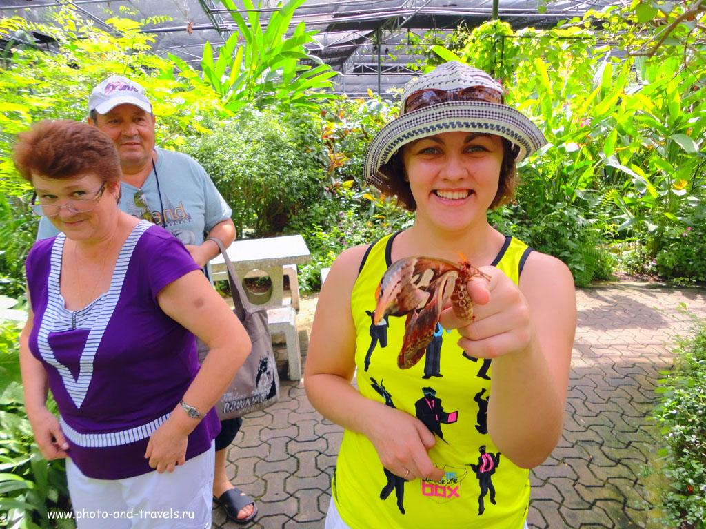 7. Вот таких огромных бабочек можно увидеть в инсектарии парка Nong Nooch Tropical Botanical Garden в Паттайе. Отзывы туристов об экскурсиях. Первый отдых в Таиланде.