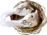 NLD Nest with birds.png