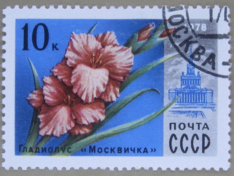 Гладиолус «Москвичка».