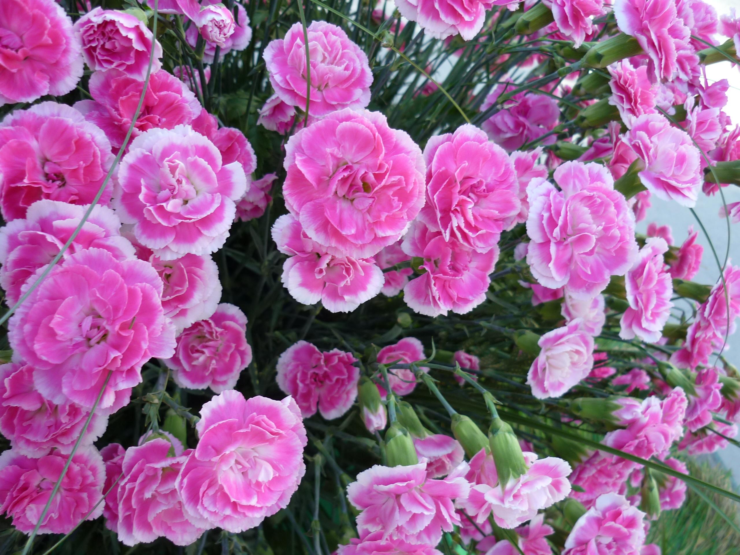 Цветочные букеты и язык цветов