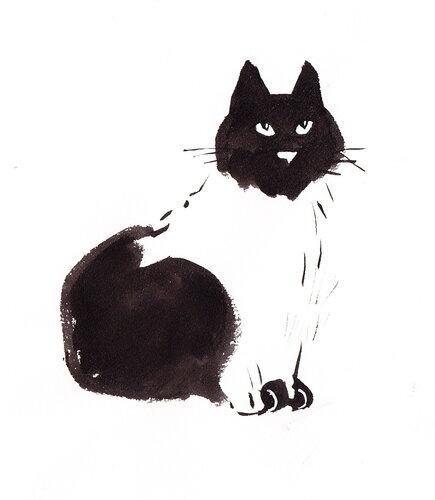 Копия кот.jpg