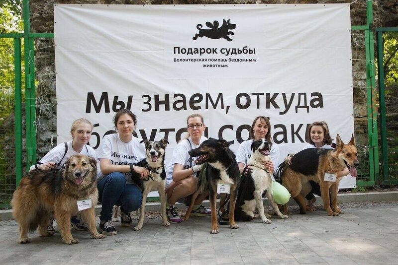 Догдей выставка собак