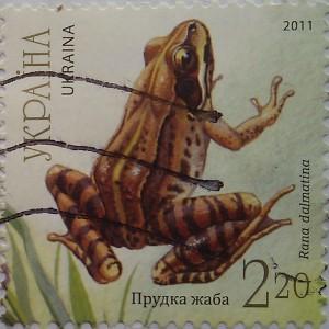 2011 N1140-1144 (b93) блок Фауна Земноводные Жабы прудка жаба 2.20