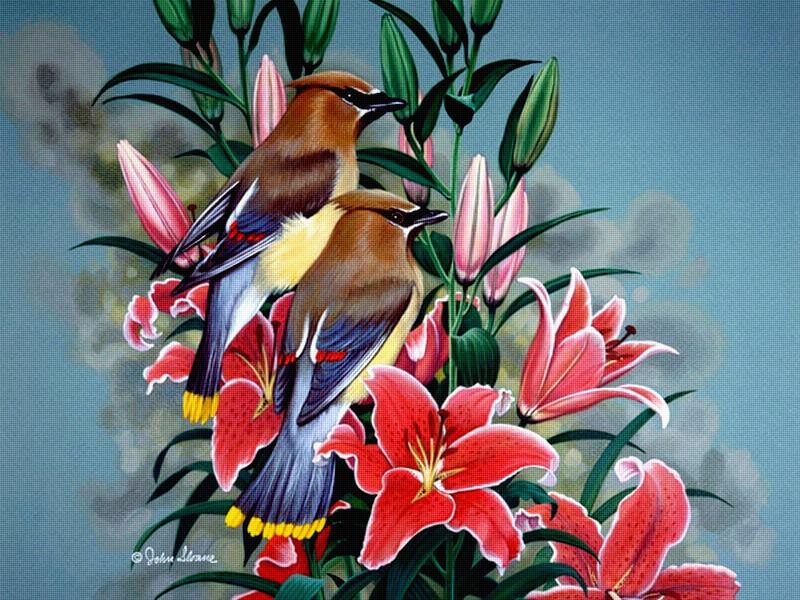 Цветы и птицы чаруют взгляд