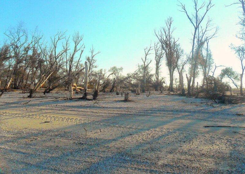 Скорбь осеннего дерева ... SAM_3877.JPG