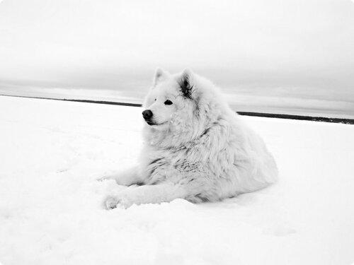 Отдых на снегу