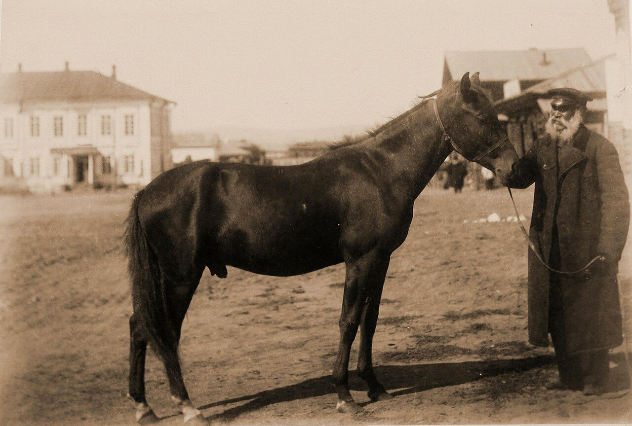 41.  Жеребчик Дорогой гнедой (2,5 лет) И. С. Иконникова (бронзовая медаль Государственного коннозаводства)