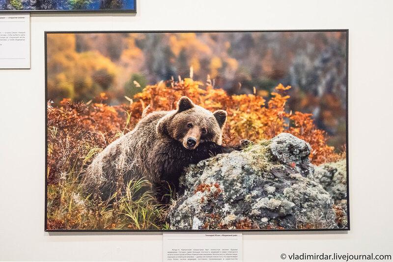 Медвежий рай. Геннадий Юсин.