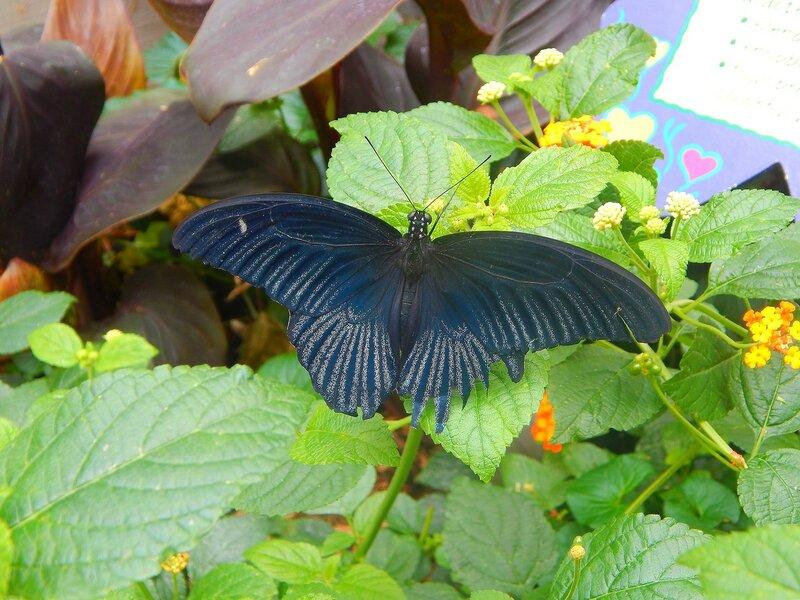 Сад бабочек.