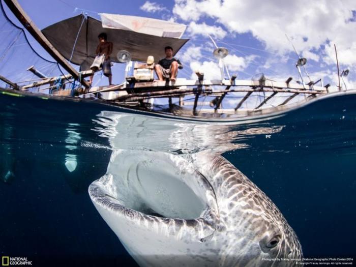 Удивительные фотографии от National Geographic