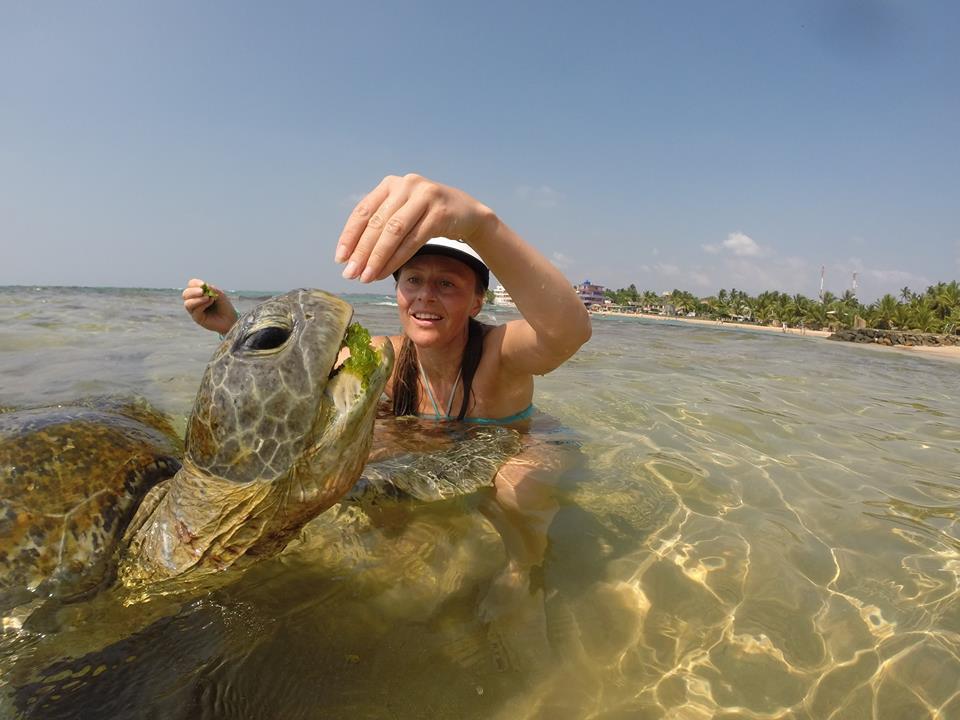 Покормить морскую черепаху в курорте Хиккадува на Шри-Ланке. Планирование путешествия по острову самостоятельно на арендованной машине.