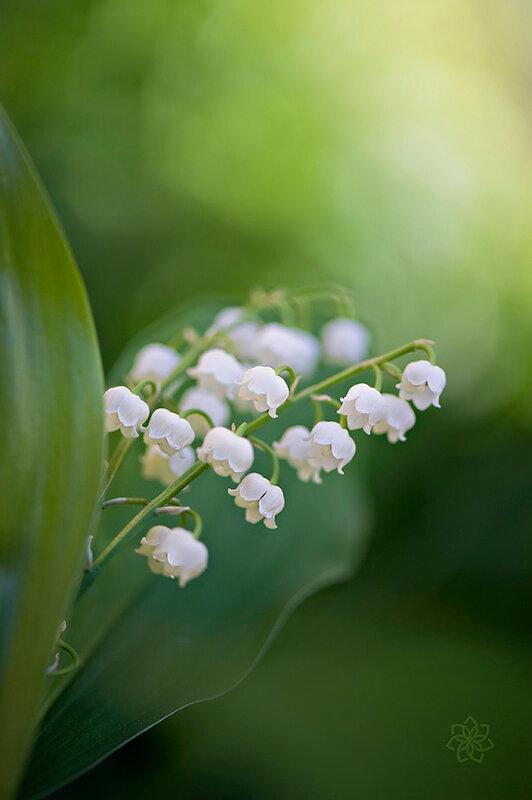 Волшебство цветов Джеки Паркер