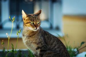 Выразительная кошка...