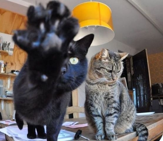 фотосъемка котов запрещена