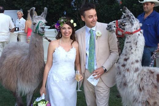Дикие животные на современных свадьбах