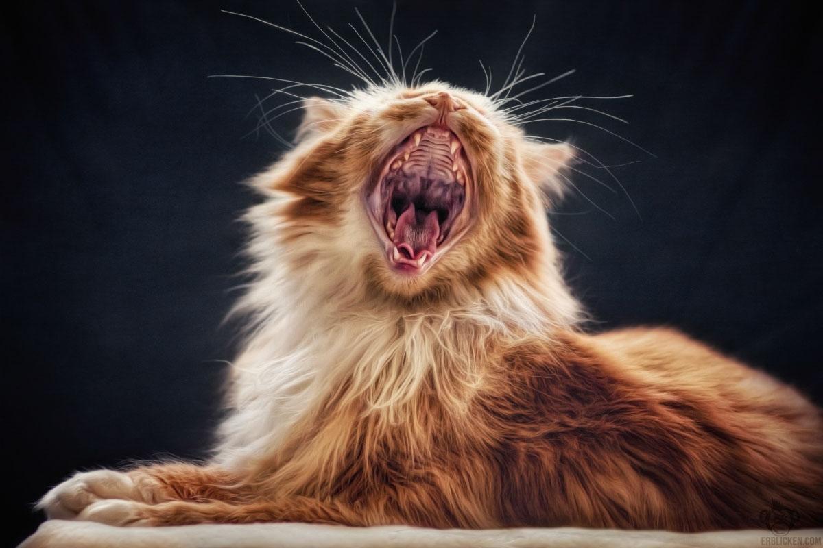 Well roared, lion
