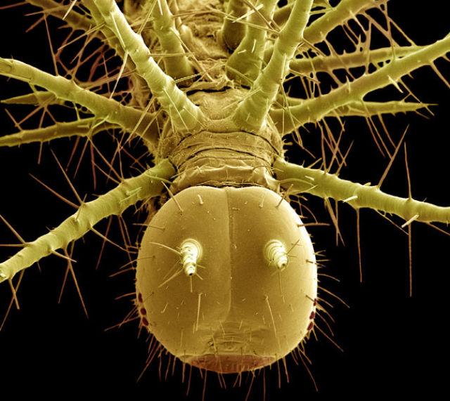 Удивительные пришельцы из микромира
