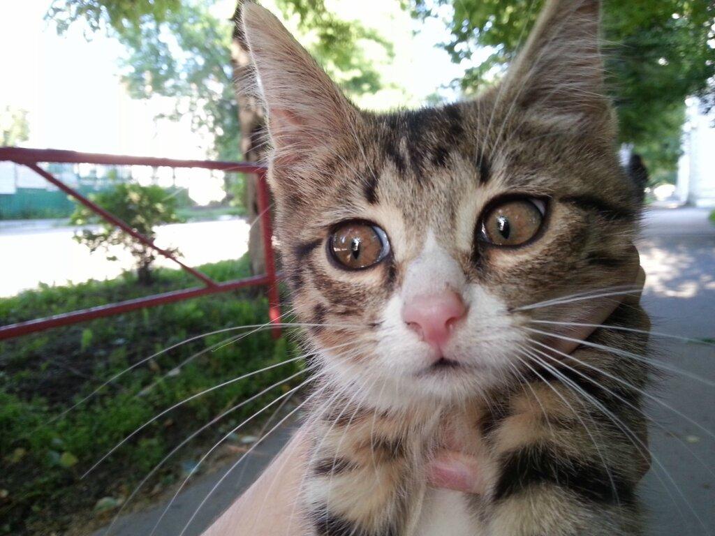 Котёнок в Юрьеве-Польском