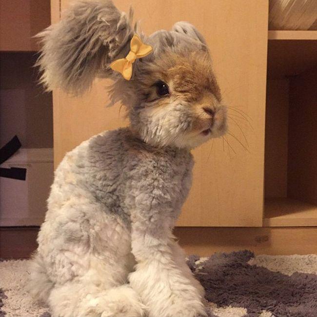 Пушистый кролик стал восходящей звездой Instagram