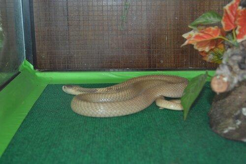 Змея в террариуме