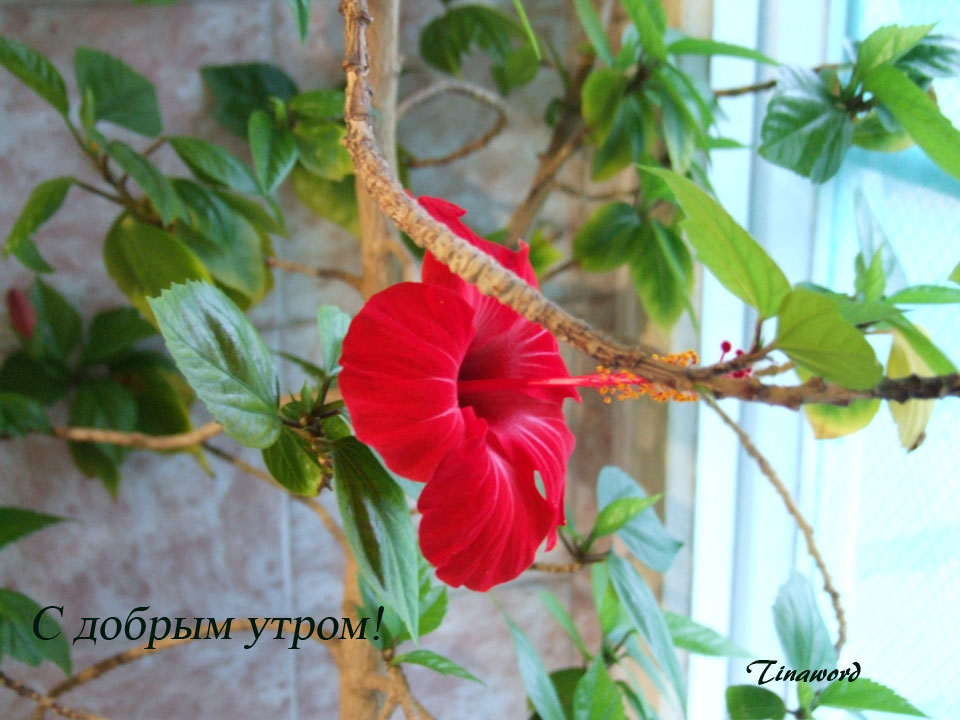 цветок-3.jpg