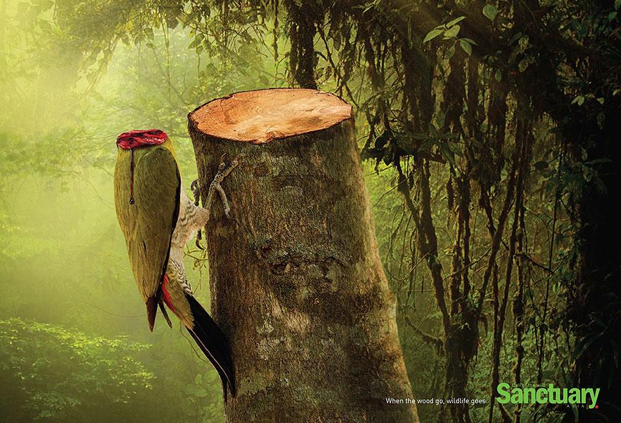 вырубая тропические леса, убиваем животных
